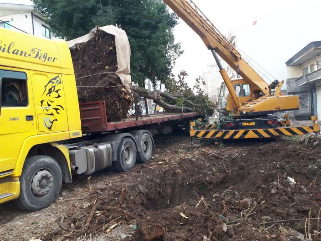 photo 2021 01 30 13 54 09 - انتقال درخت کهنسال مگلونیا به بوستان گیلانه به روش روتبال