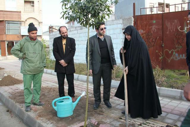photo 2019 01 23 18 32 47 - کاشت نهال نارنج در بلوار شهید حبیب زاده