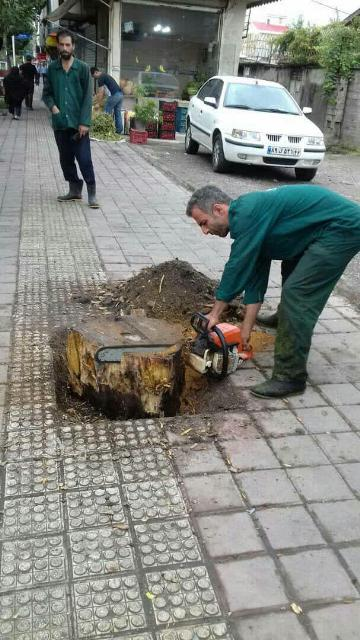 photo 2019 09 07 11 37 22 - گزارش تصویری حوزه مدیریت خدمات شهری از هفته بیستم طرح پاکسازی هفتگی محلات شهر رشت